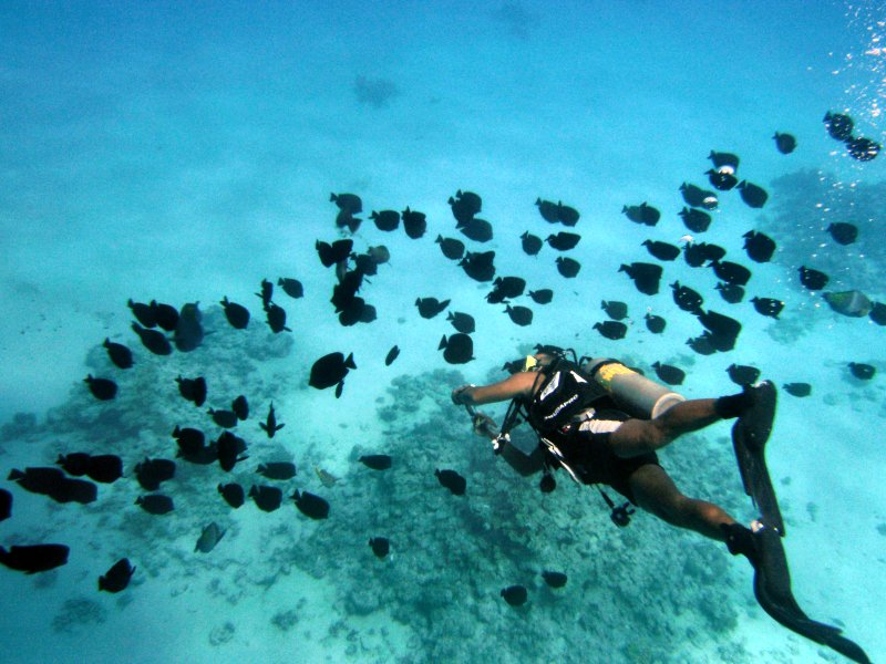 Ahmed swims through shoal of Angelfish