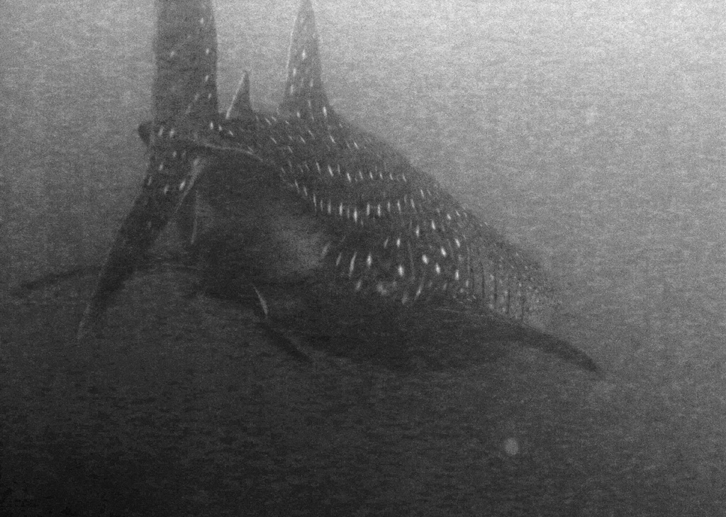 Whale Shark at depth